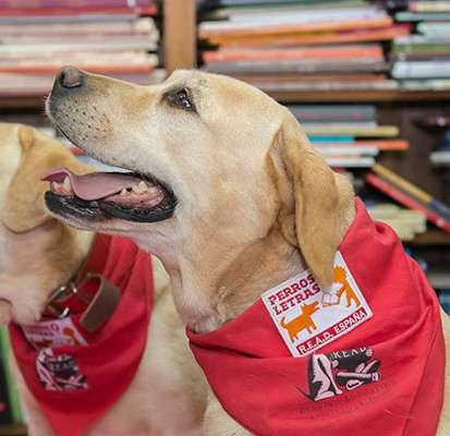 Perros y Letras R.E.A.D. España - Autism 4 Good