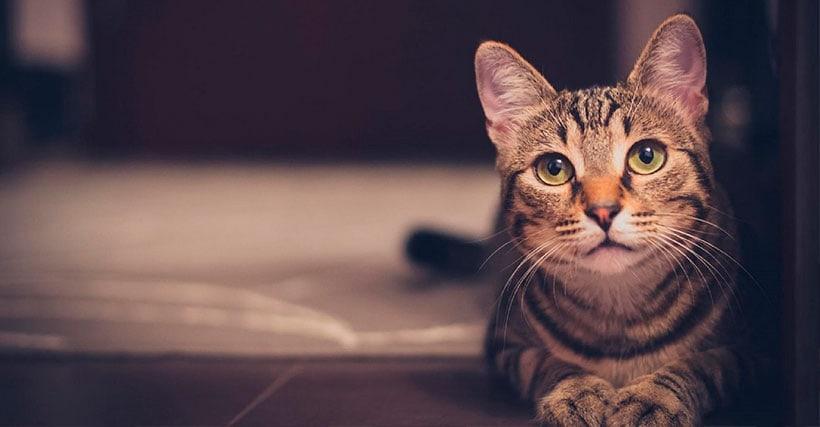 ¿Gatos y Autismo?