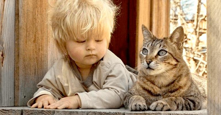 Gatos y Autismo